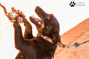 How you can help PETS - PETS JHB